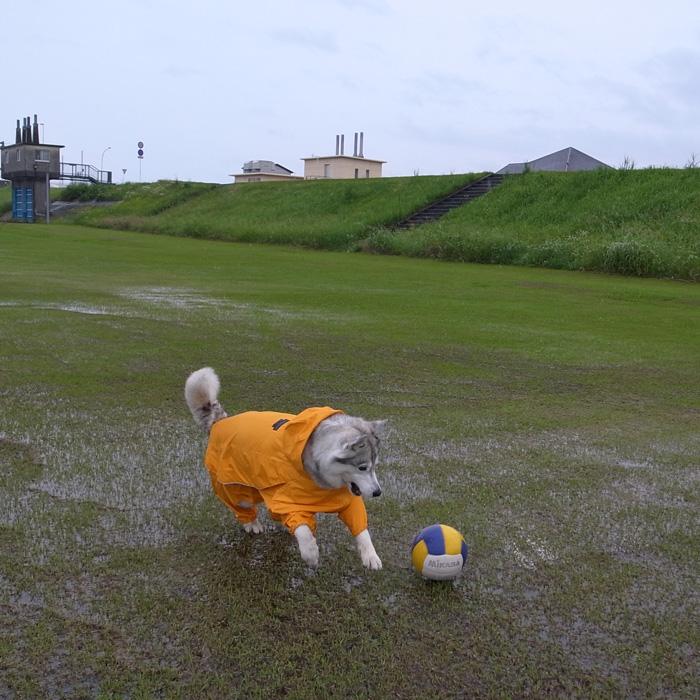 雨に走れば_c0049299_13401933.jpg