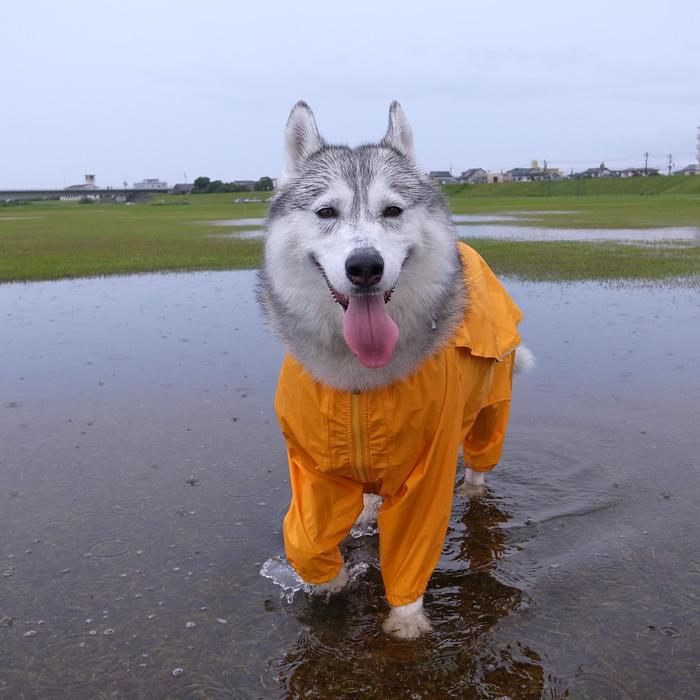 雨に走れば_c0049299_13425087.jpg