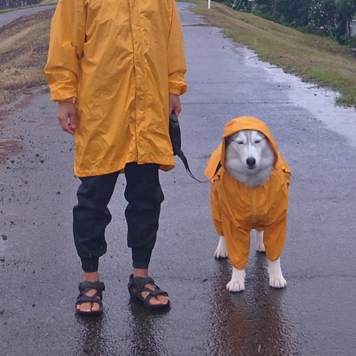 雨に走れば_c0049299_1349686.jpg
