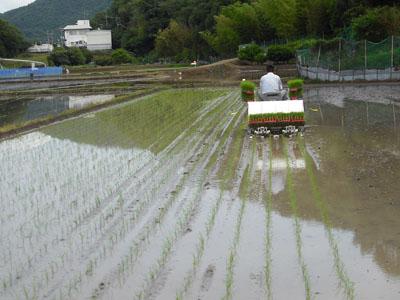 営農会/田植_c0081499_8483094.jpg