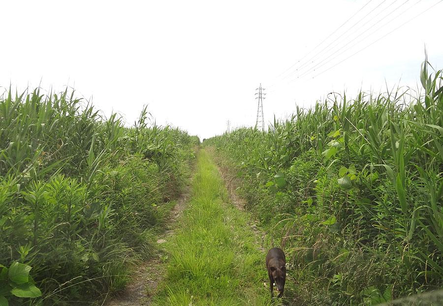 ナナの散歩道を草刈り_d0151813_144495.jpg