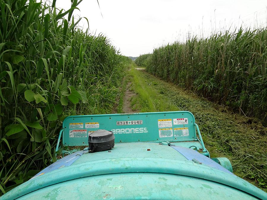 ナナの散歩道を草刈り_d0151813_1461852.jpg