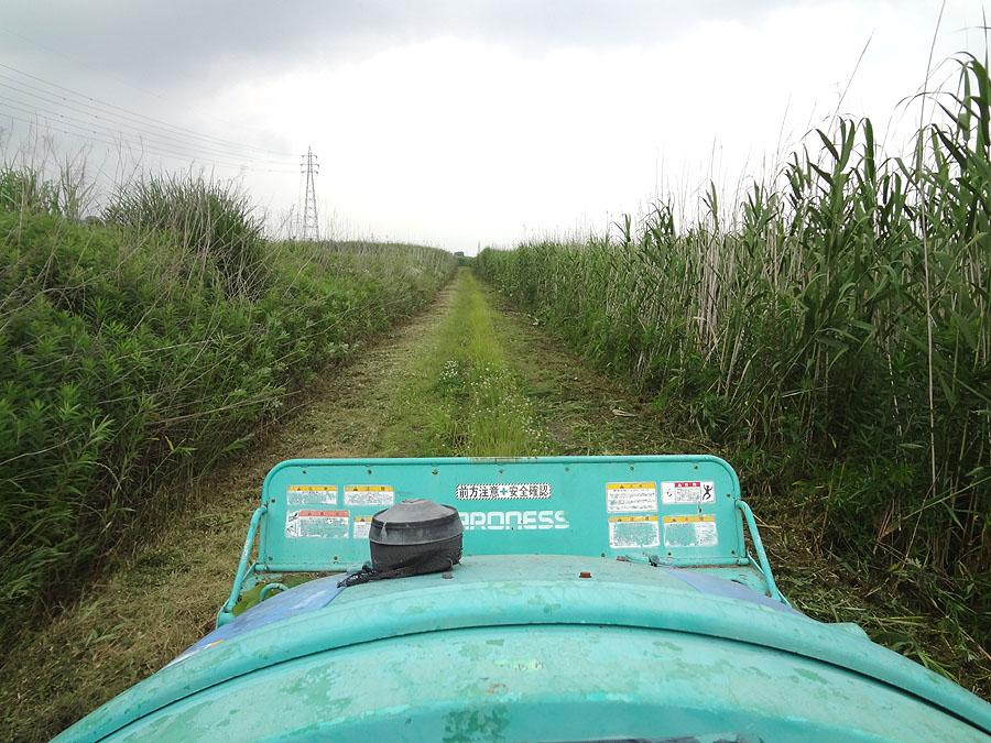 ナナの散歩道を草刈り_d0151813_1464957.jpg