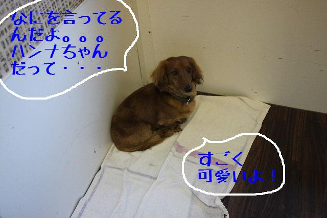 b0130018_972660.jpg