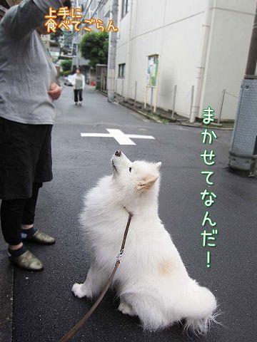 ドン・クサオ再び_c0062832_5225256.jpg