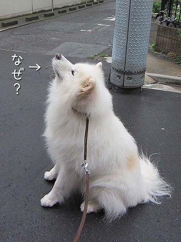 ドン・クサオ再び_c0062832_5231666.jpg