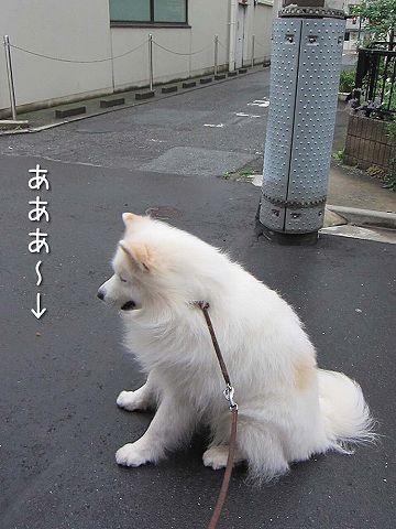 ドン・クサオ再び_c0062832_5232063.jpg