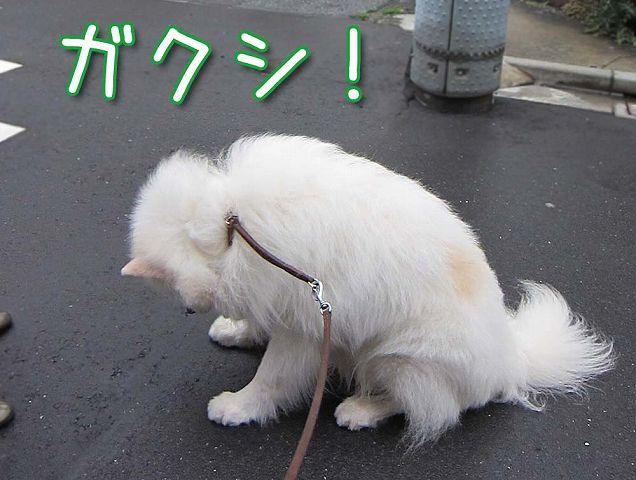 ドン・クサオ再び_c0062832_5232794.jpg