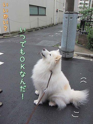 ドン・クサオ再び_c0062832_523780.jpg
