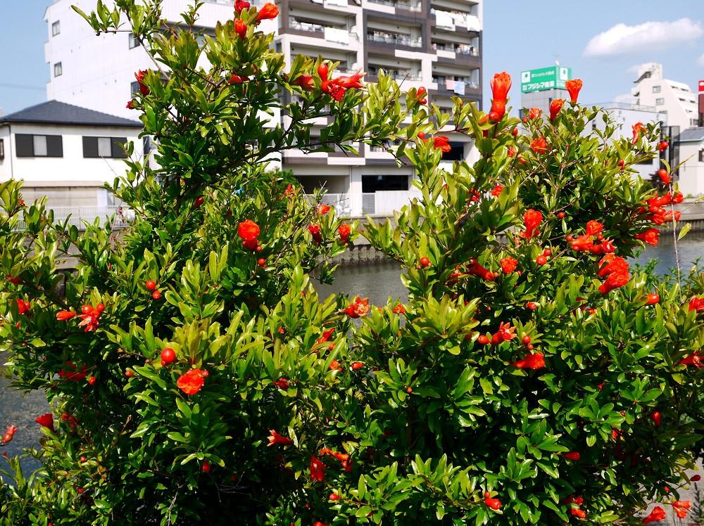 花のある風景_b0093754_20465654.jpg