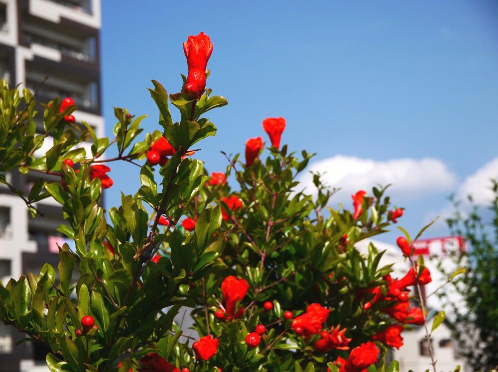 花のある風景_b0093754_20471877.jpg