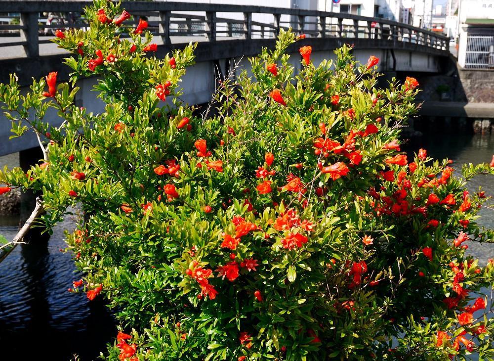 花のある風景_b0093754_2047847.jpg