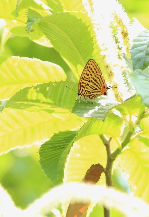 ■■ ゼフィルスの季節 2012-3  憧れは 遠く・・・ ■■_c0195662_236481.jpg