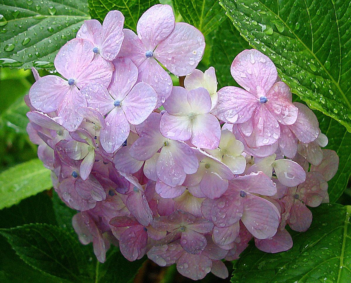 雨に咲く花_f0215767_15361069.jpg