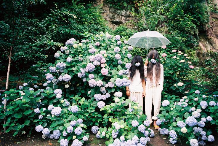 紫陽花ゾンビ_c0195272_1951214.jpg