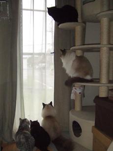 猫5匹_e0182479_13581077.jpg