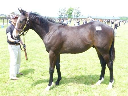 2012年社台募集馬ツアーを終えて_a0036685_2154714.jpg