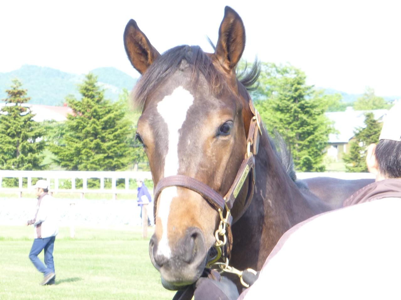 2012年社台募集馬ツアーを終えて_a0036685_21552959.jpg