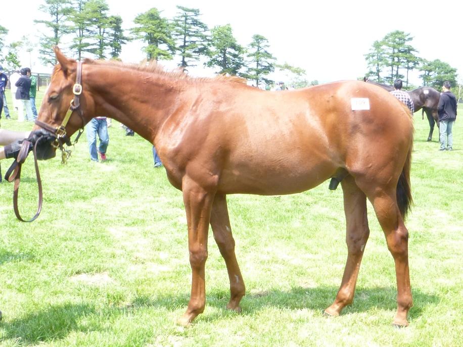 2012年社台募集馬ツアーを終えて_a0036685_21571244.jpg