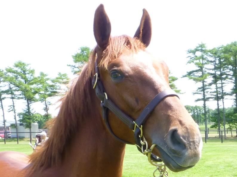 2012年社台募集馬ツアーを終えて_a0036685_21581660.jpg