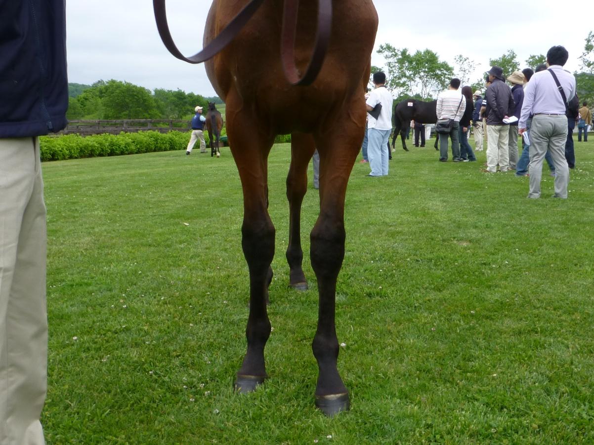 2012年社台募集馬ツアーを終えて_a0036685_22105865.jpg