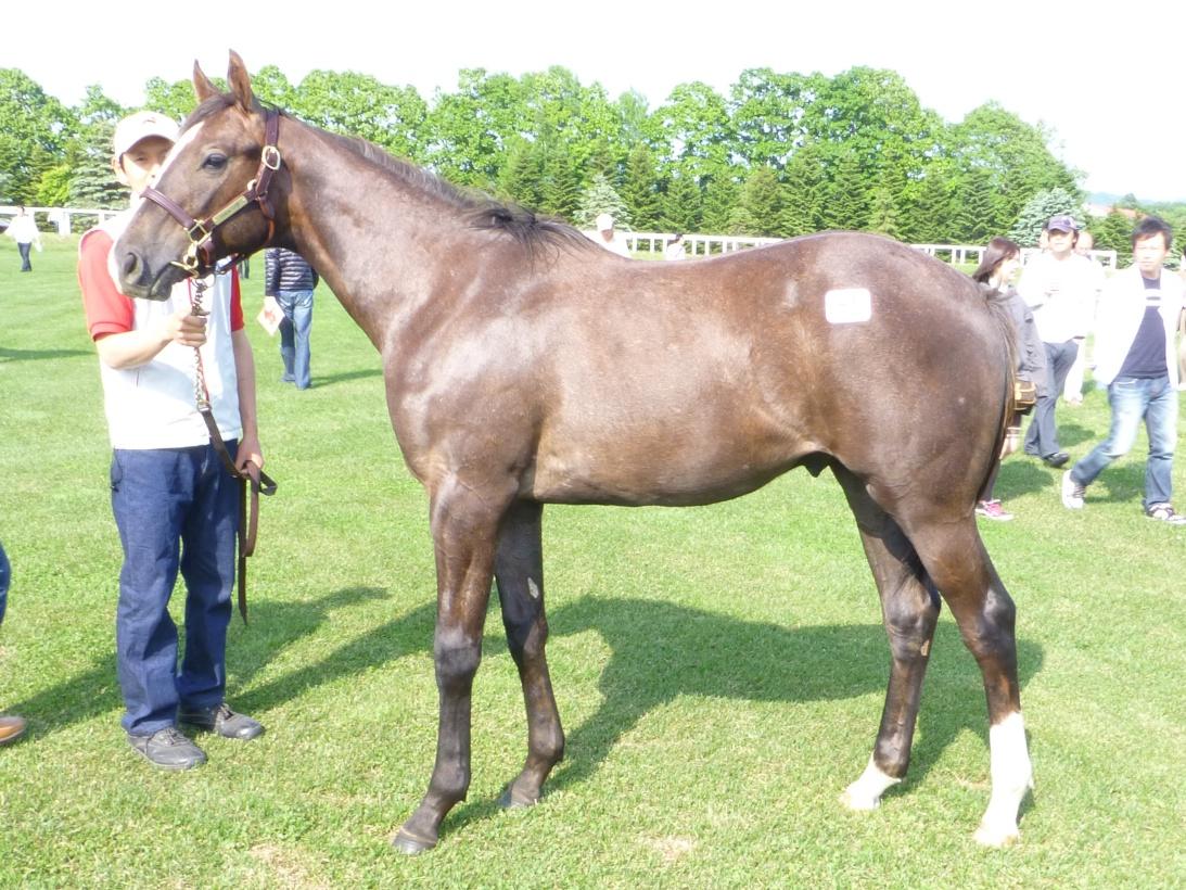 2012年社台募集馬ツアーを終えて_a0036685_2215587.jpg