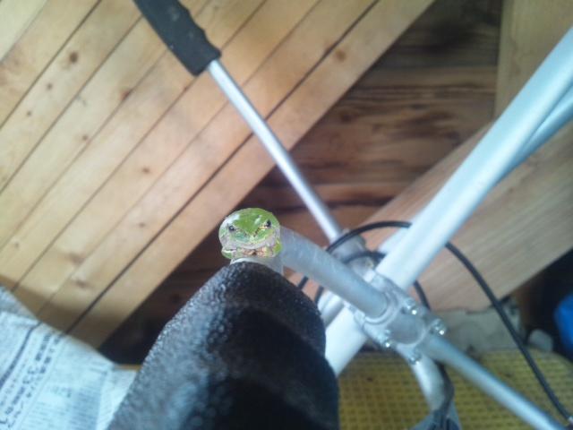 小屋の蛙_a0138985_22574023.jpg