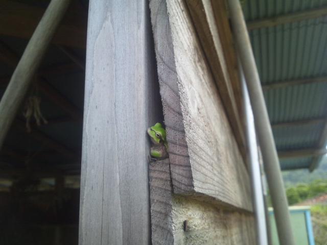 小屋の蛙_a0138985_22582677.jpg