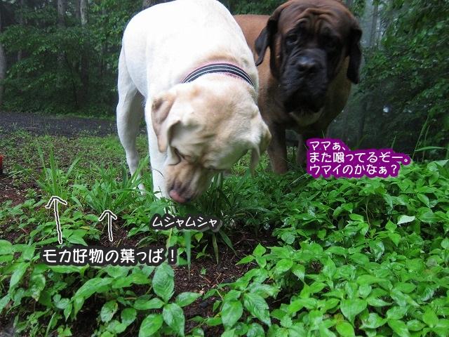 雑草を食べるとこんな顔_e0192217_8161781.jpg