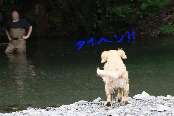2012年川遊び さいご_f0203423_19123614.jpg
