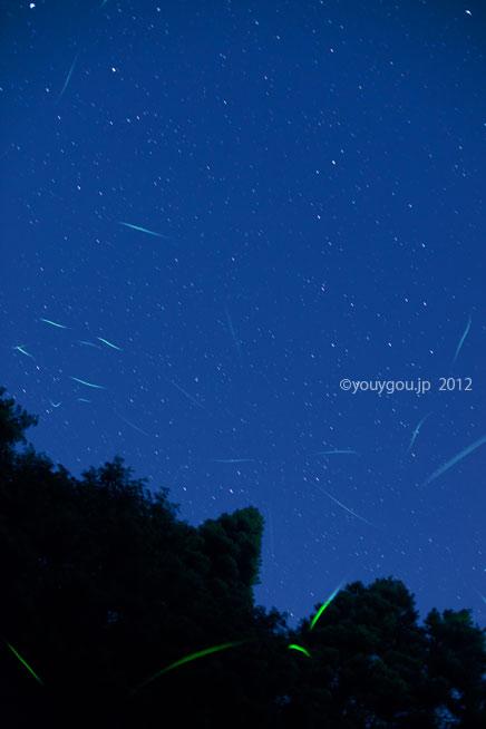 蛍、奈良市にて   Firefly at Nara city._e0245846_151719.jpg
