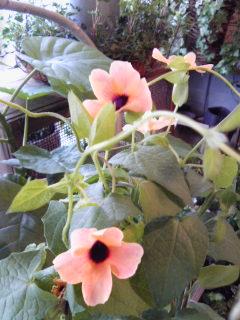 夏を楽しもう水生植物。。。_a0229658_913381.jpg