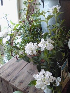 夏を楽しもう水生植物。。。_a0229658_9142981.jpg