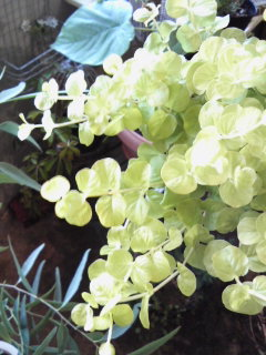 夏を楽しもう水生植物。。。_a0229658_9152018.jpg