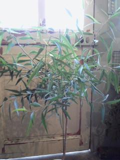 夏を楽しもう水生植物。。。_a0229658_9165693.jpg
