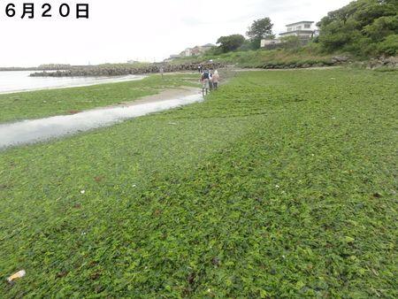 [アマモの田んぼづくり]…アマモを育てて海のこともっと知ろう!_c0108460_20264912.jpg