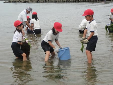 [アマモの田んぼづくり]…アマモを育てて海のこともっと知ろう!_c0108460_20373344.jpg