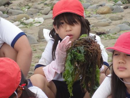 [アマモの田んぼづくり]…アマモを育てて海のこともっと知ろう!_c0108460_2041389.jpg