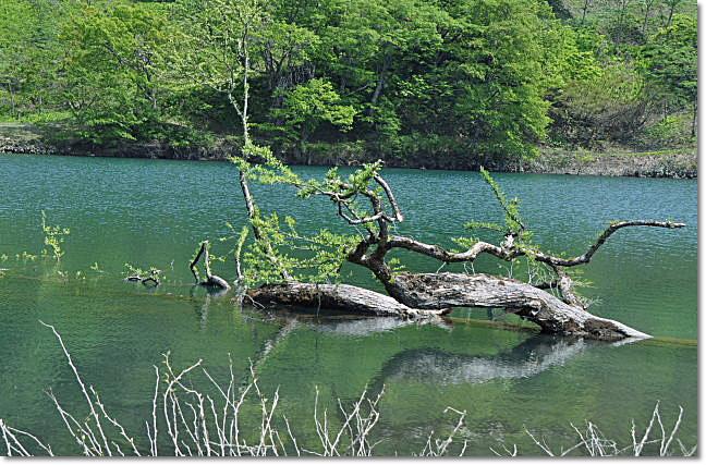 糸魚川市・・・高浪の池_b0053765_22372341.jpg