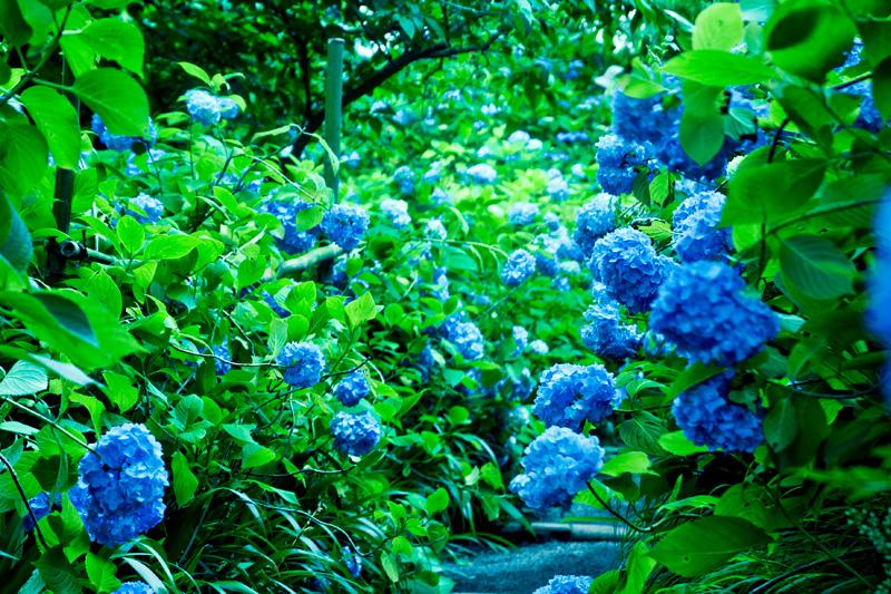 青く 蒼く 藍く 碧く_a0246781_257840.jpg