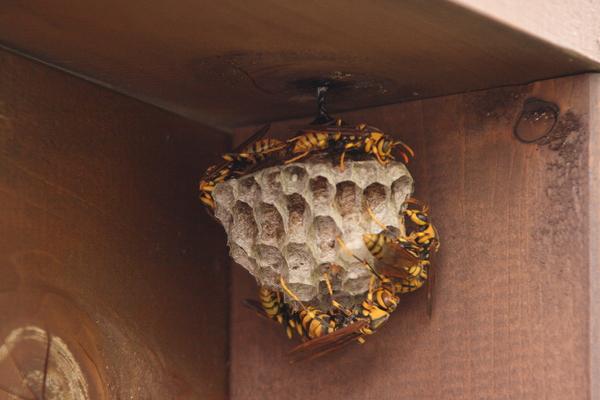 蜂の巣_e0231387_1772011.jpg
