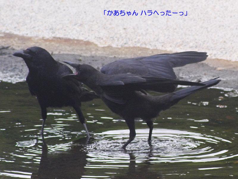b0174191_20365739.jpg