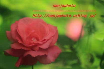 e0268999_17211047.jpg