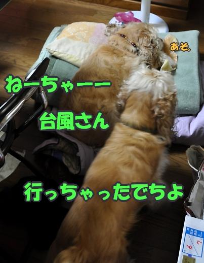 b0067012_091278.jpg