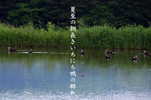夏至_e0099713_23313867.jpg