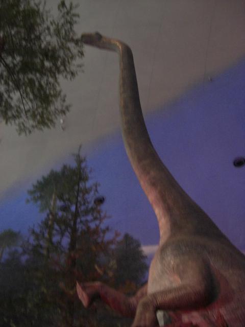 恐竜の世界_f0226713_1194070.jpg