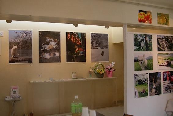 『うめぐみ写真展6 〜Four Seasons〜』は、終了しました。_f0138928_1105650.jpg