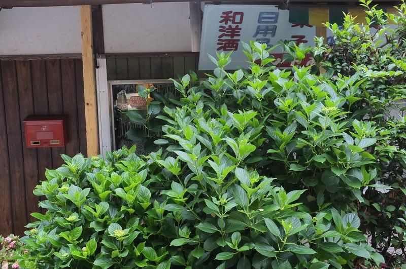 正しい日本の田舎風景 四国_f0050534_8145847.jpg