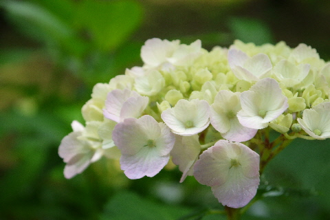 磯川緑地公園_e0227942_22111953.jpg