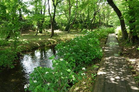 磯川緑地公園_e0227942_2252736.jpg